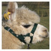 Alpaca Headcollar Buckle Fastening Green