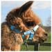 Alpaca Headcollar Buckle Fastening Sky Blue