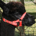 Alpaca Headcollar Buckle Fastening Red