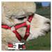 Alpaca Headcollar Snap Fastening Red Peruvian