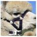 Alpaca Headcollar Snap Fastening Navy Peruvian