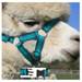 Alpaca Headcollar Snap Fastening Green Peruvian