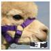 Alpaca Headcollar Snap Fastening Purple