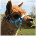 Alpaca Headcollar Snap Fastening Sky Blue