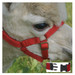 Alpaca Headcollar Snap Fastening Red