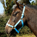 Rhinegold Nylon Horse Headcollar Baby Blue
