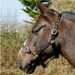 Rhinegold Nylon Horse Headcollar Black