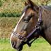 Rhinegold Nylon Horse Headcollar Black & Purple