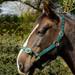 Rhinegold Nylon Horse Headcollar Green