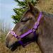 Rhinegold Nylon Horse Headcollar Purple