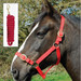 Rhinegold Nylon Horse Headcollar with Matching Lead Rope Red