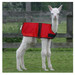 Cria Coat Red