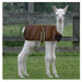 Cria Coat Brown