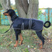 Dog Coat - Waterproof and Padded - Black