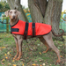 Dog Coat - Waterproof and Padded - Red