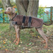 Dog Coat - Waterproof and Padded - Brown