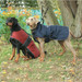 Dog Coat with Under Chest Protection