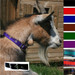 Goat Collar With Buckle