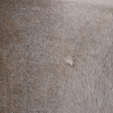 Cowhide Rug APR012-21 (240cm x 210cm)