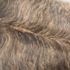 Cowhide Rug MAY185-21 (210cm x 190cm)