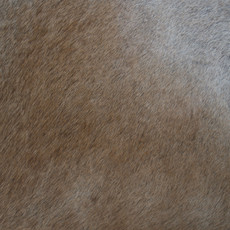 Tan and White Cowhide Rug