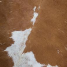Cowhide Rug AUG117-21 (200cm x 190cm)
