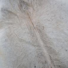 Cowhide Rug AUG225-21 (220cm x 180cm)