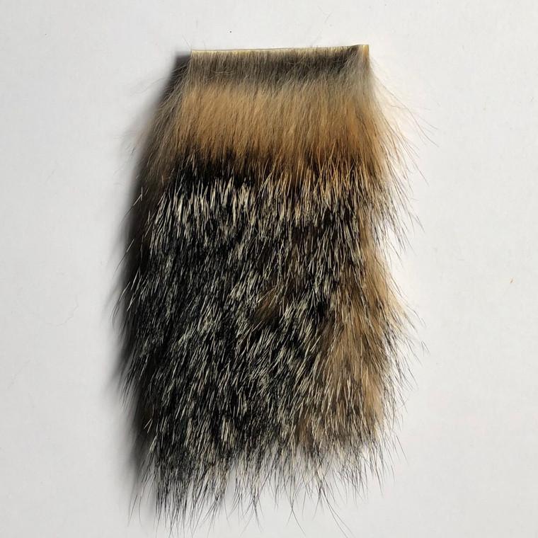 Gray Fox Wapsi