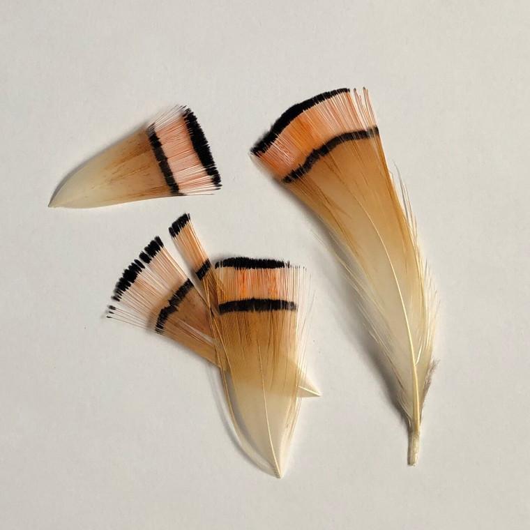 Golden Pheasant Tippets - Hareline