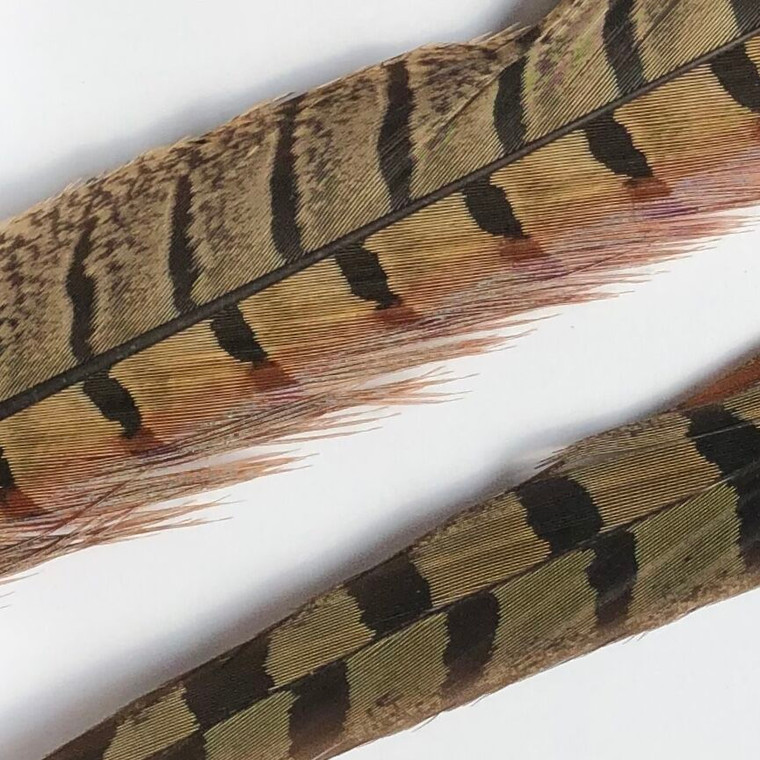 Ringneck tail feathers - Hareline