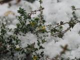 December Thyme