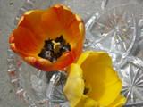 Lodge Tulip