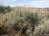 Black Canyon Sage