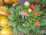 October Foxglove