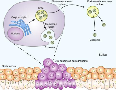 exosome-def.jpg