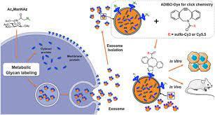 exosome-dye.jpg