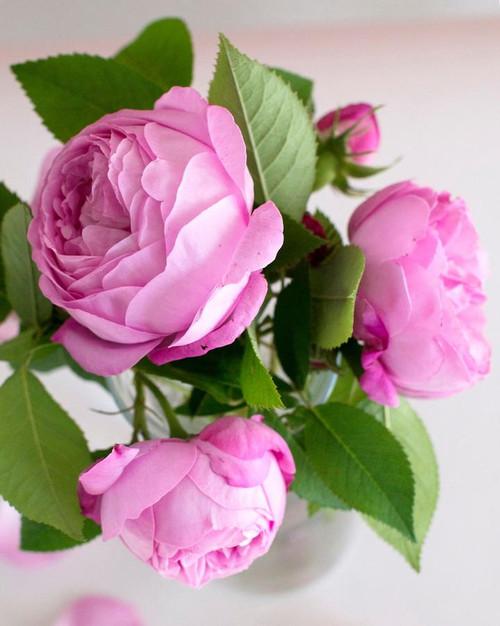 Pica- Beautiful Blooms Kit