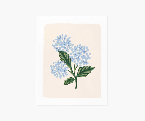 Blue Hydrangea Bloom Art Print 8x10