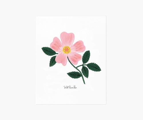 Wild Prairie Rose Art Print 8x10