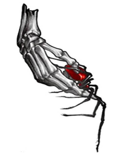 Heart in my Hand Temporary Tattoo