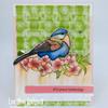 Singing Praises Clear Stamp Set