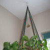 Room Shield EMF protection pendant for rooms, cars, babies hanging in a plant.