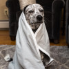 SYB EMF protection blanket - dog madonna - just too cute not to post