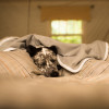 SYB EMF protection blanket  dog looks so comfy wrapped up in bed