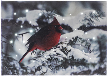 CARDINAL ON SNOWY BRANCH - OSW187903