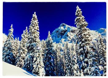 SNOWY FOREST - OSW177989