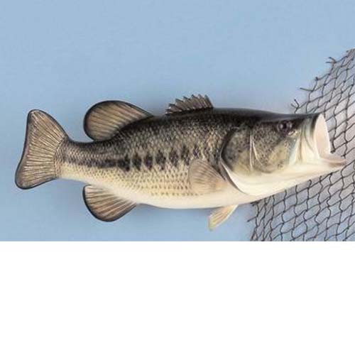 Large Mouth Bass Fish Mount