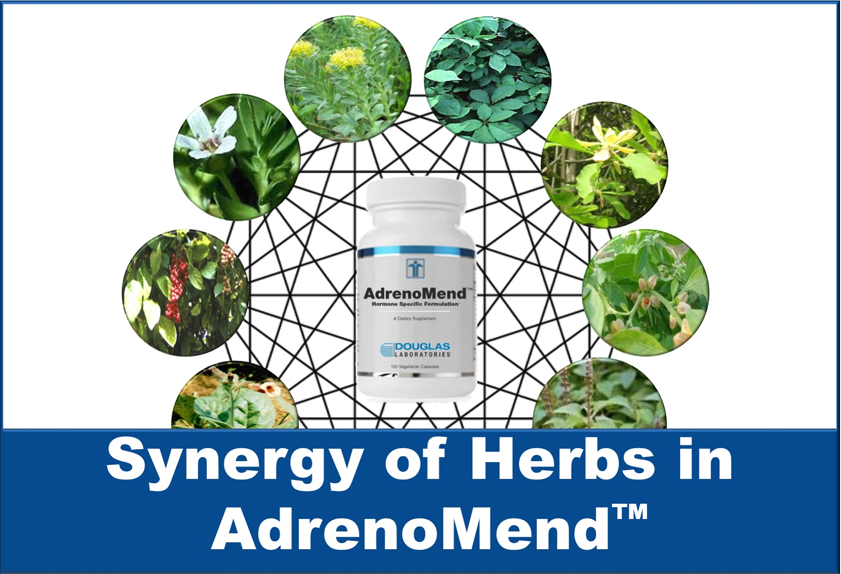 Synergy of Herbs in AdrenoMend™