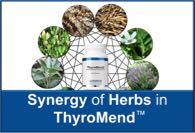 Synergy of Herbs in ThyroMend™