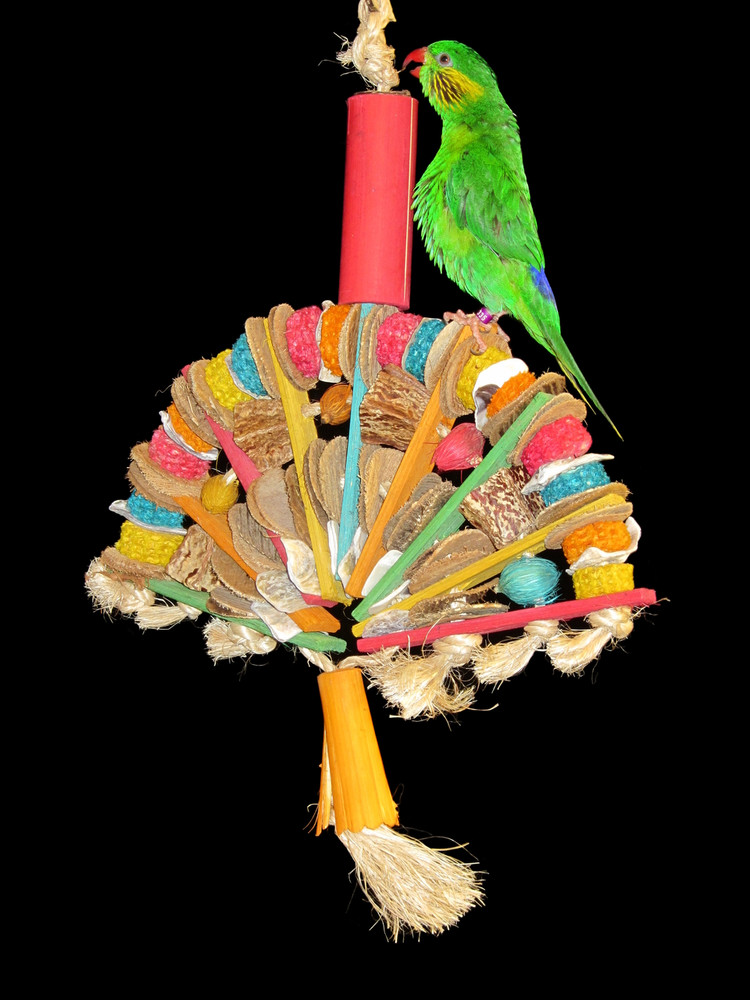 "Bird atop their Planet Pleasures ""Fan"" bird toy."